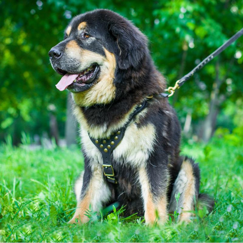 220c6aed9c1 Arnéses caninos por razas de perro