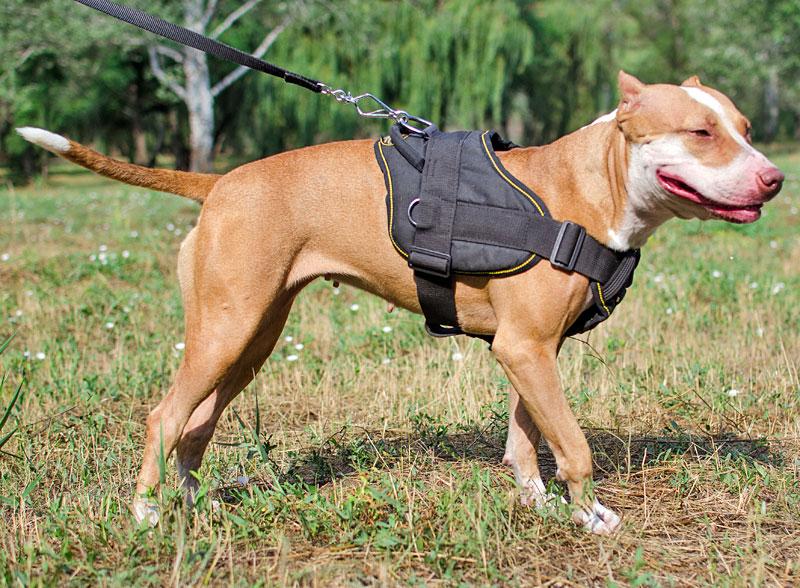arnes adiestramiento perros